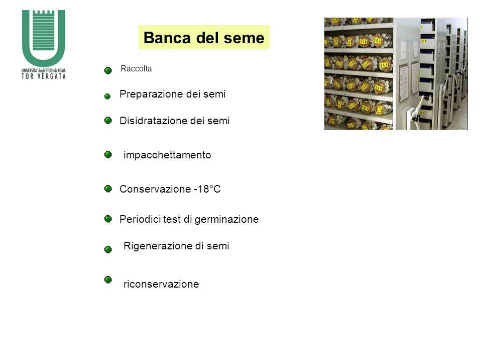 Raccolta Preparazione dei semi Disidratazione dei semi impacchettamento Conservazione -18°C Periodici test di germinazione Rigenerazione di semi riconservazione Banca del seme