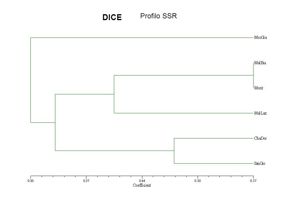 DICE Profilo SSR