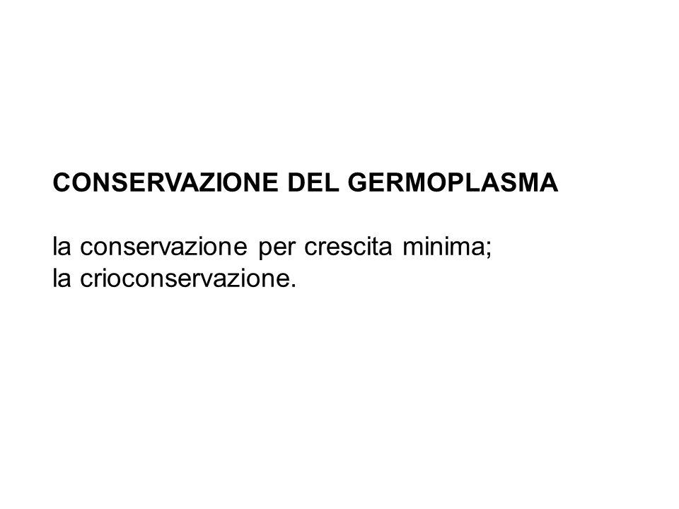 CONSERVAZIONE DEL GERMOPLASMA la conservazione per crescita minima; la crioconservazione.
