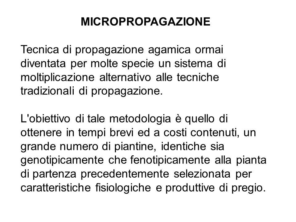 MICROPROPAGAZIONE Tecnica di propagazione agamica ormai diventata per molte specie un sistema di moltiplicazione alternativo alle tecniche tradizionali di propagazione.