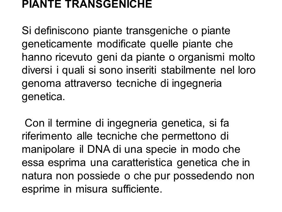PIANTE TRANSGENICHE Si definiscono piante transgeniche o piante geneticamente modificate quelle piante che hanno ricevuto geni da piante o organismi molto diversi i quali si sono inseriti stabilmente nel loro genoma attraverso tecniche di ingegneria genetica.