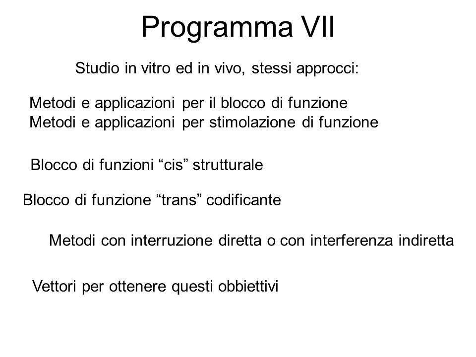 Programma VII Metodi e applicazioni per il blocco di funzione Metodi e applicazioni per stimolazione di funzione Blocco di funzioni cis strutturale Bl
