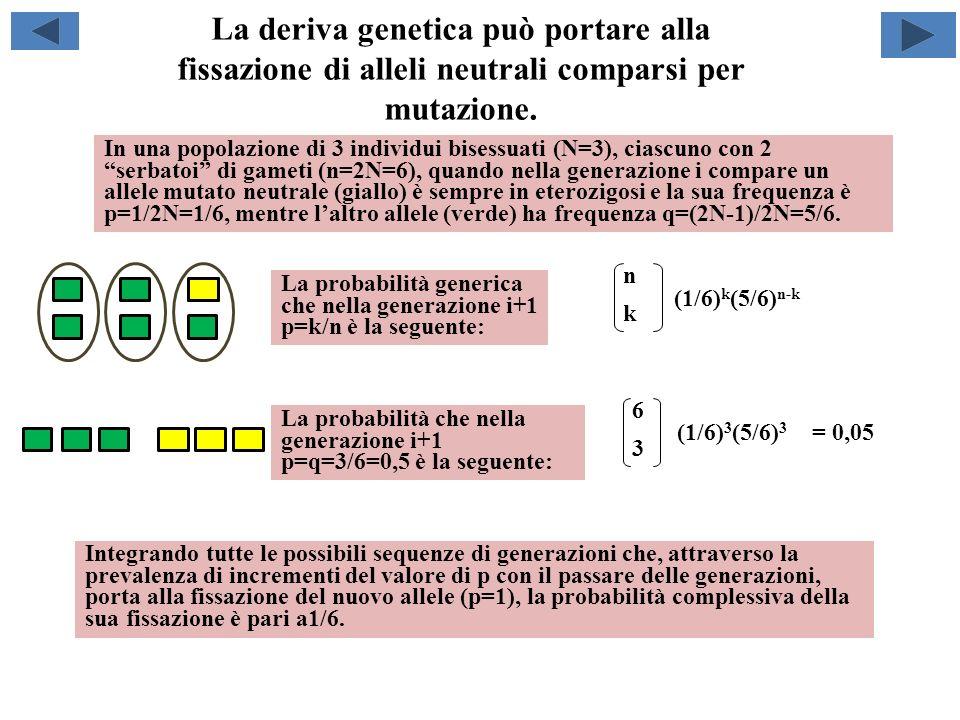 La deriva genetica può portare alla fissazione di mutazioni cromosomiche sottodominanti comparse per mutazione.