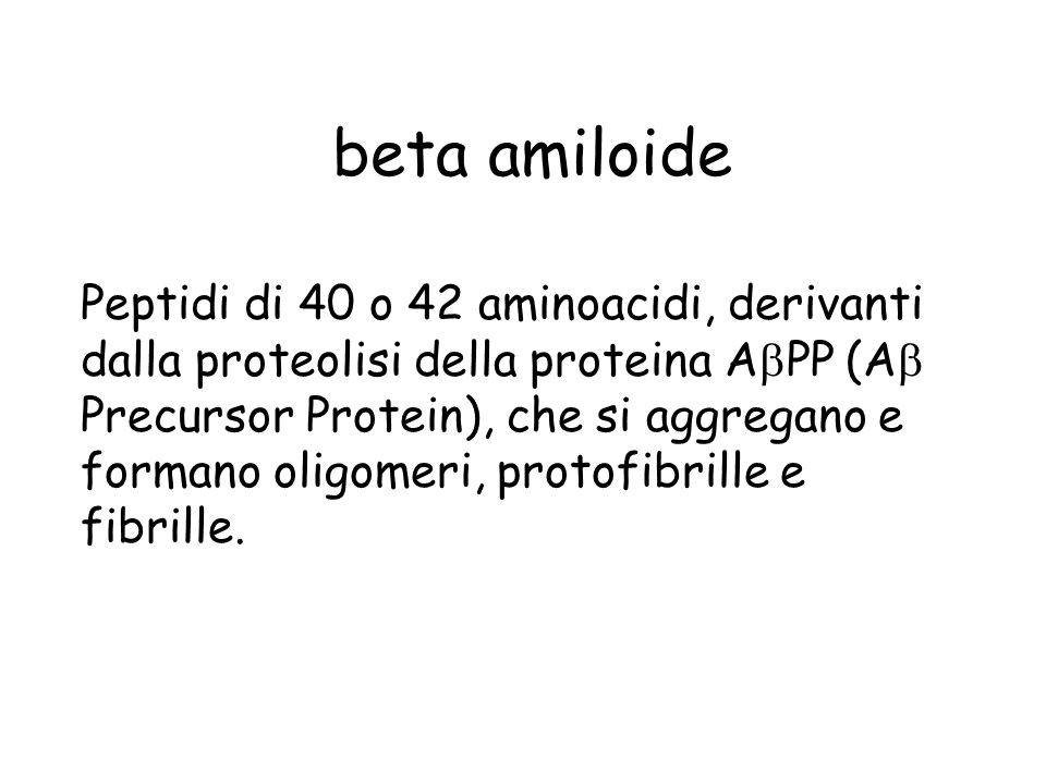 beta amiloide Peptidi di 40 o 42 aminoacidi, derivanti dalla proteolisi della proteina A PP (A Precursor Protein), che si aggregano e formano oligomer