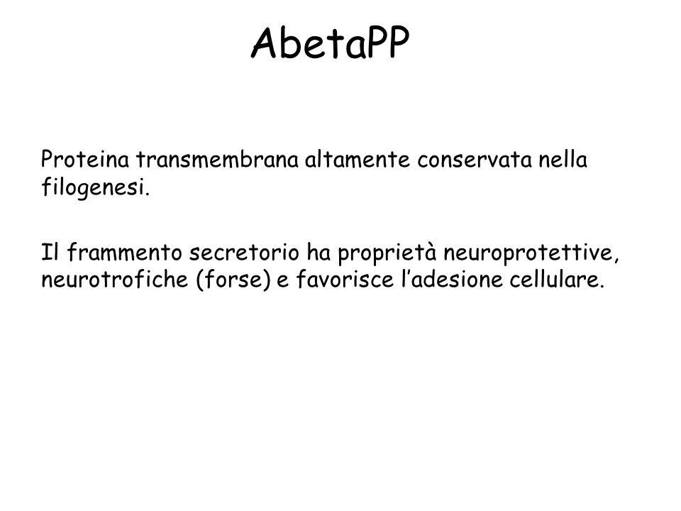AbetaPP Proteina transmembrana altamente conservata nella filogenesi. Il frammento secretorio ha proprietà neuroprotettive, neurotrofiche (forse) e fa