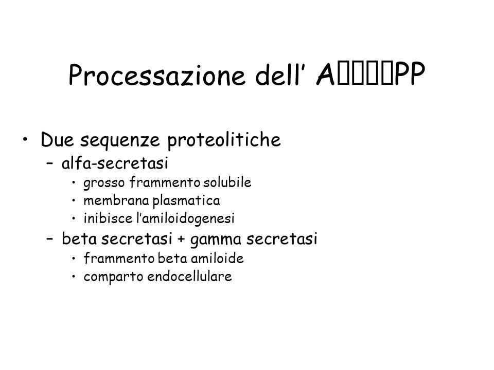 Processazione dell A PP Due sequenze proteolitiche –alfa-secretasi grosso frammento solubile membrana plasmatica inibisce lamiloidogenesi –beta secret