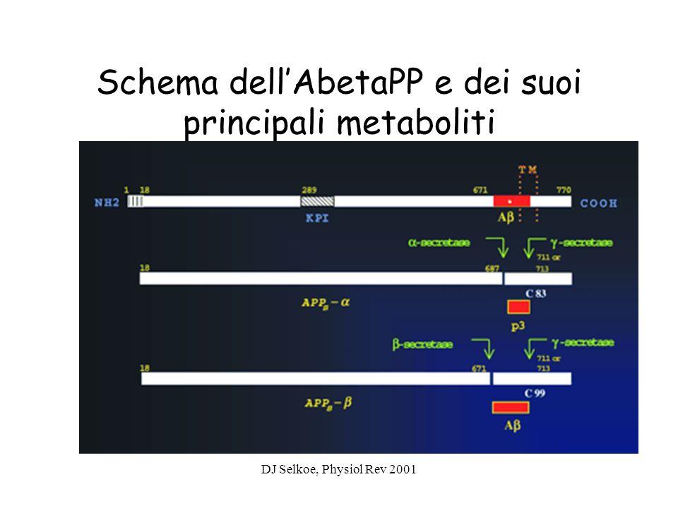 DJ Selkoe, Physiol Rev 2001 Schema dellAbetaPP e dei suoi principali metaboliti