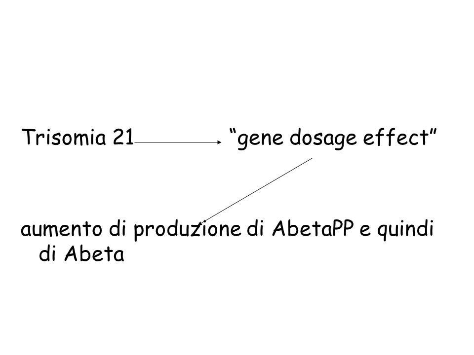 Trisomia 21 gene dosage effect aumento di produzione di AbetaPP e quindi di Abeta