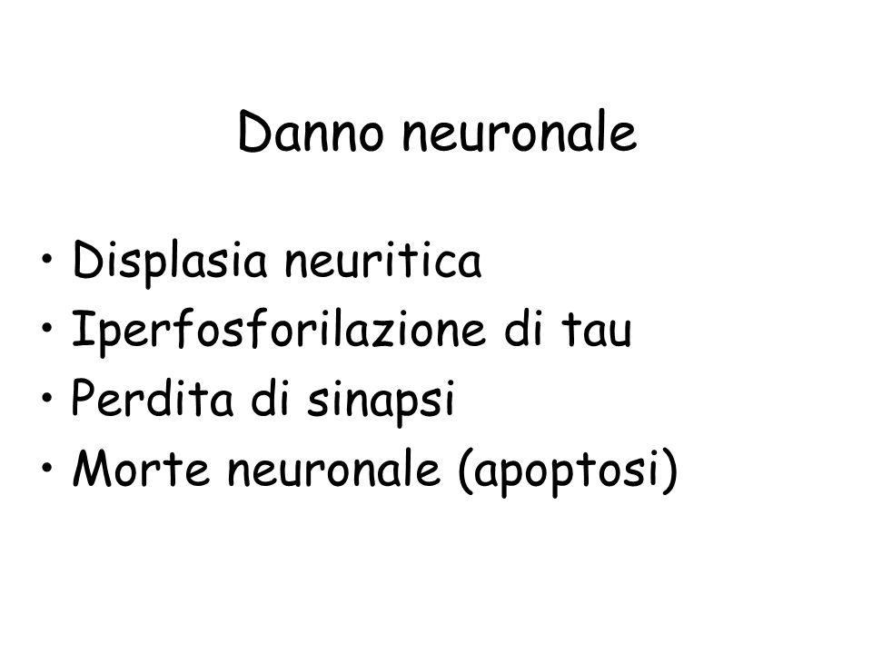 Danno neuronale Displasia neuritica Iperfosforilazione di tau Perdita di sinapsi Morte neuronale (apoptosi)