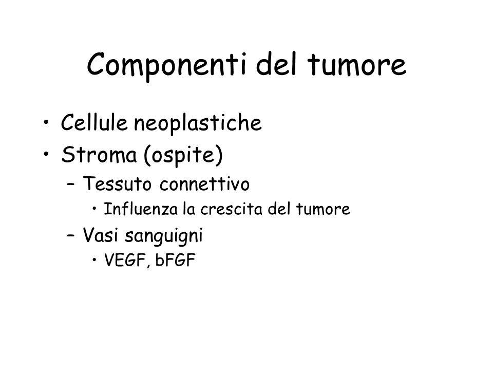 Componenti del tumore Cellule neoplastiche Stroma (ospite) –Tessuto connettivo Influenza la crescita del tumore –Vasi sanguigni VEGF, bFGF