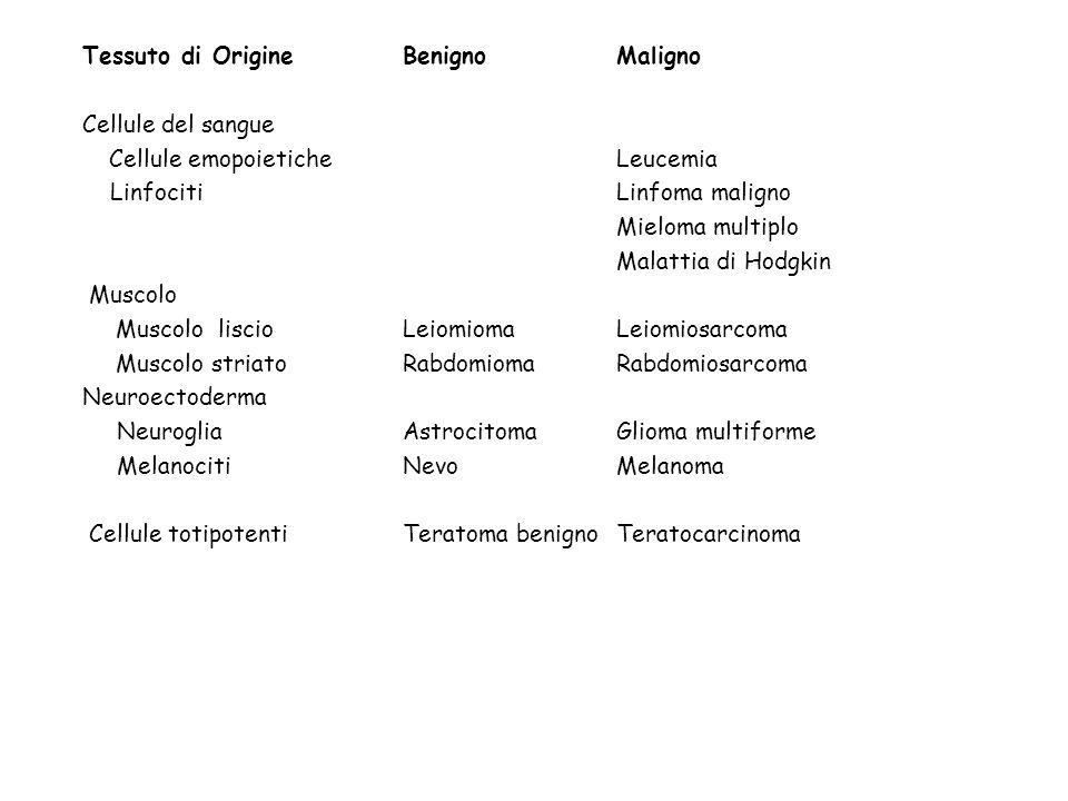 Tessuto di OrigineBenignoMaligno Cellule del sangue Cellule emopoieticheLeucemia LinfocitiLinfoma maligno Mieloma multiplo Malattia di Hodgkin Muscolo