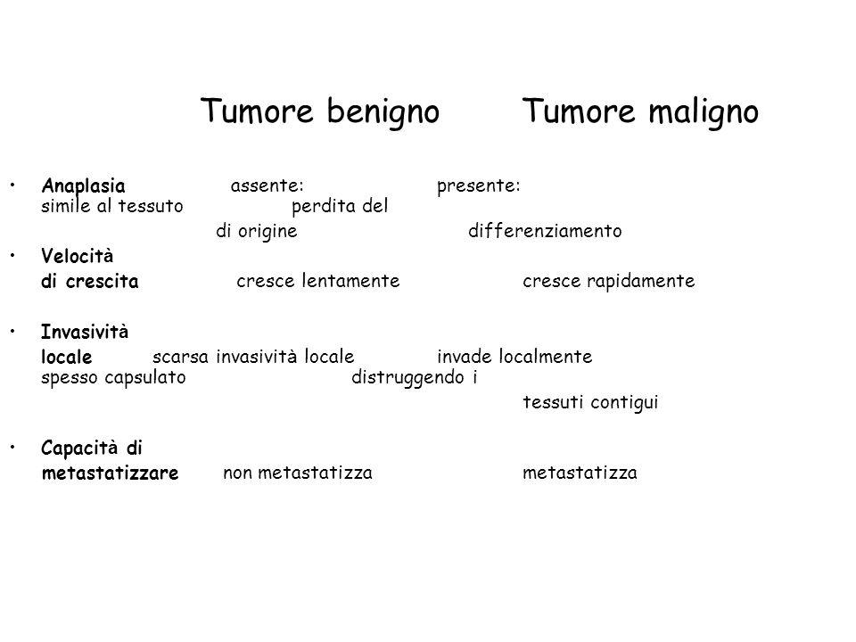 Tumore benigno Tumore maligno Anaplasia assente: presente: simile al tessuto perdita del di origine differenziamento Velocit à di crescita cresce lent