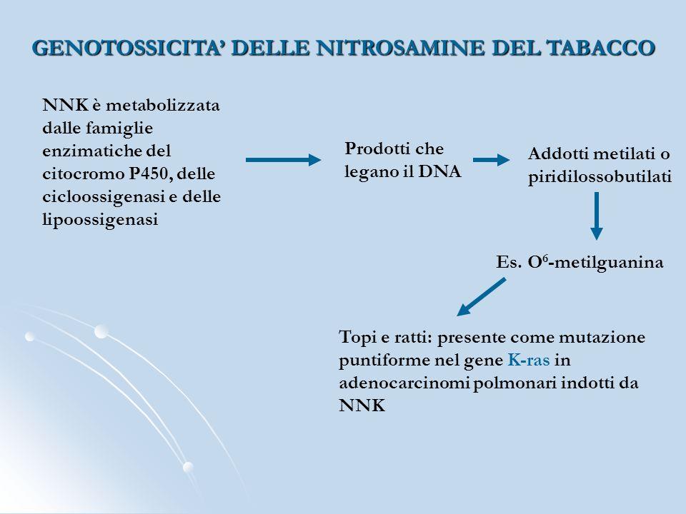 GENOTOSSICITA DELLE NITROSAMINE DEL TABACCO NNK è metabolizzata dalle famiglie enzimatiche del citocromo P450, delle cicloossigenasi e delle lipoossig