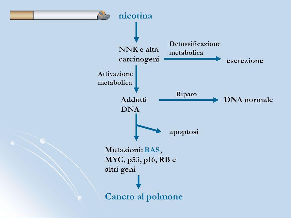 nicotina NNK e altri carcinogeni escrezione Detossificazione metabolica Attivazione metabolica Addotti DNA Riparo DNA normale apoptosi Mutazioni: RAS,