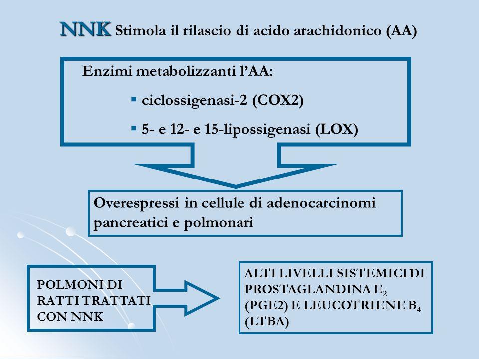Enzimi metabolizzanti lAA: ciclossigenasi-2 (COX2) 5- e 12- e 15-lipossigenasi (LOX) Overespressi in cellule di adenocarcinomi pancreatici e polmonari