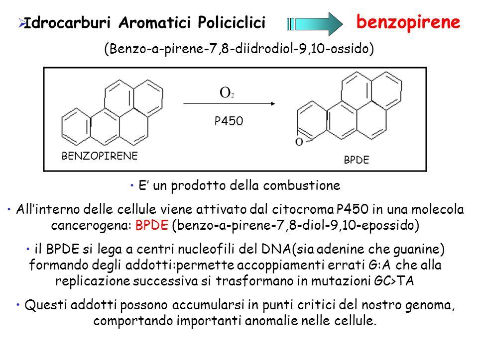 I drocarburi Aromatici Policiclici benzopirene (Benzo-a-pirene-7,8-diidrodiol-9,10-ossido) E un prodotto della combustione Allinterno delle cellule vi
