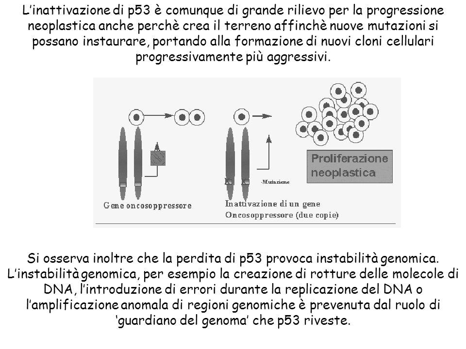 Linattivazione di p53 è comunque di grande rilievo per la progressione neoplastica anche perchè crea il terreno affinchè nuove mutazioni si possano in