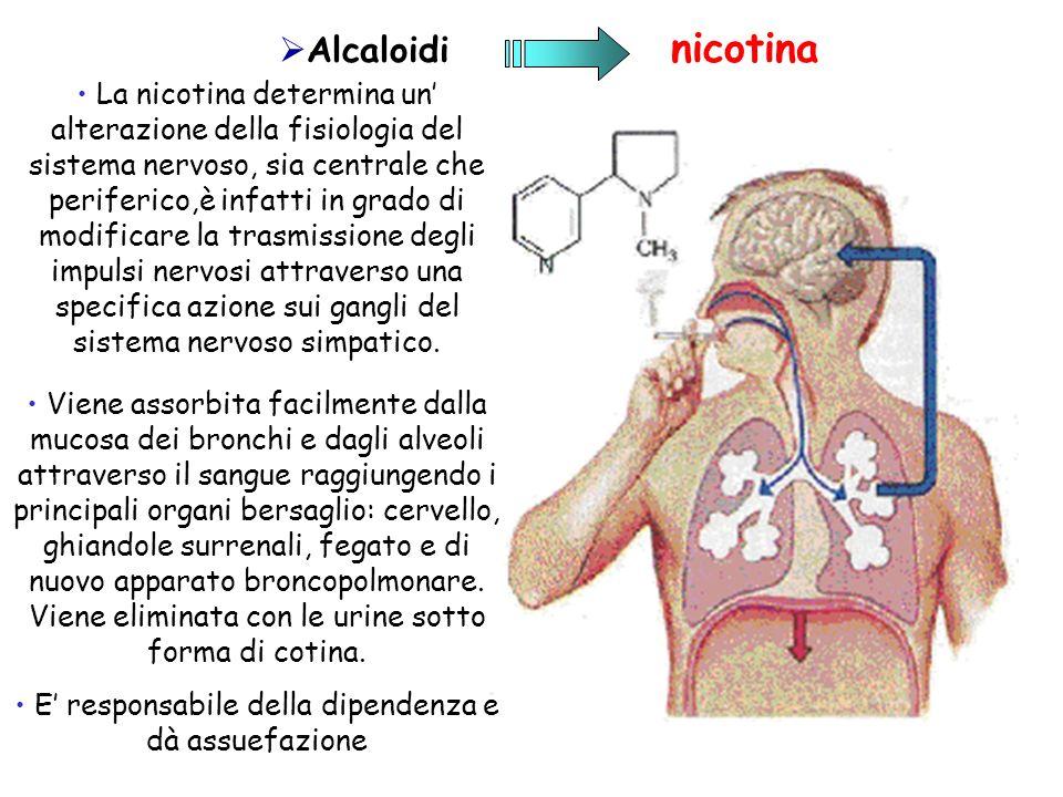 La nicotina determina un alterazione della fisiologia del sistema nervoso, sia centrale che periferico,è infatti in grado di modificare la trasmission