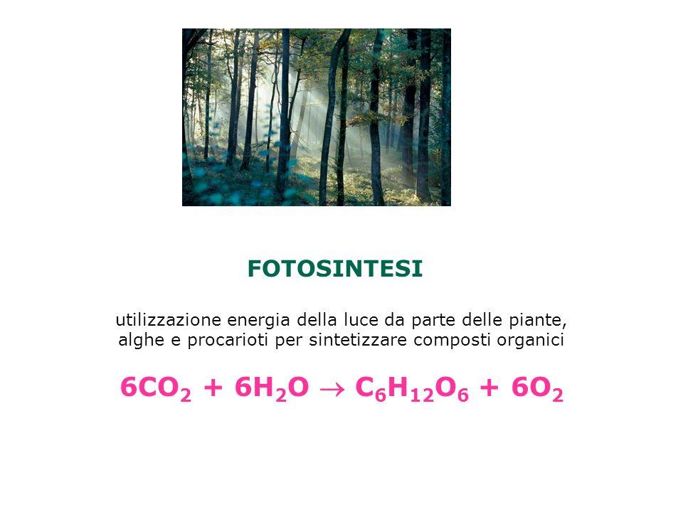 FOTOSINTESI utilizzazione energia della luce da parte delle piante, alghe e procarioti per sintetizzare composti organici 6CO 2 + 6H 2 O C 6 H 12 O 6