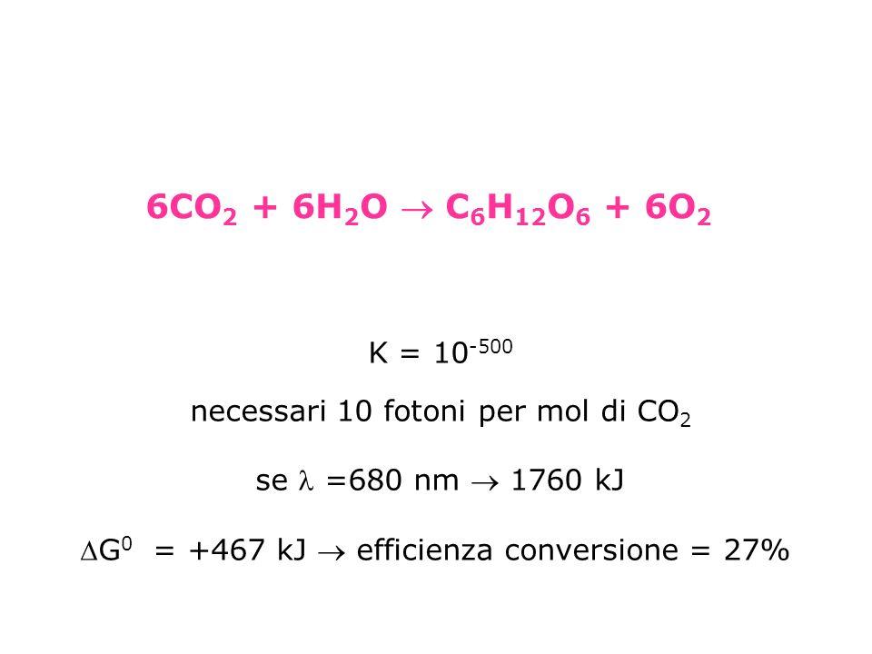 K = 10 -500 necessari 10 fotoni per mol di CO 2 se =680 nm 1760 kJ G 0 = +467 kJ efficienza conversione = 27% 6CO 2 + 6H 2 O C 6 H 12 O 6 + 6O 2