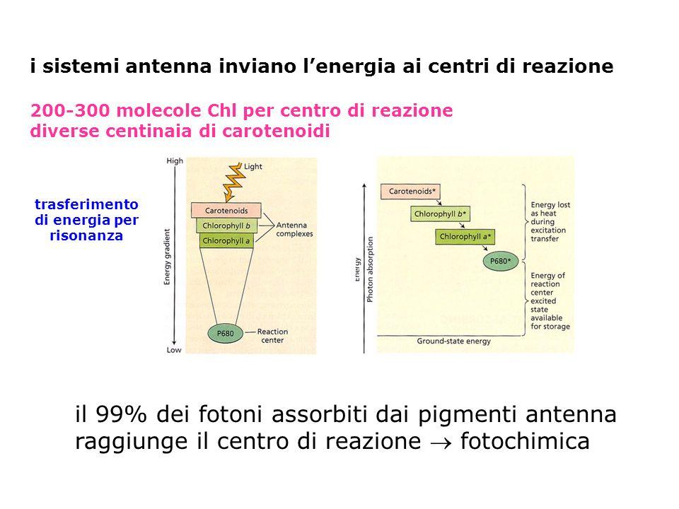 i sistemi antenna inviano lenergia ai centri di reazione 200-300 molecole Chl per centro di reazione diverse centinaia di carotenoidi trasferimento di