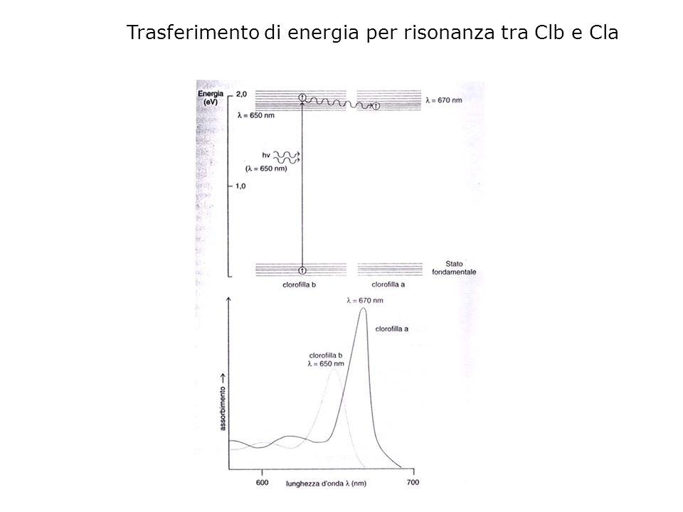 Trasferimento di energia per risonanza tra Clb e Cla