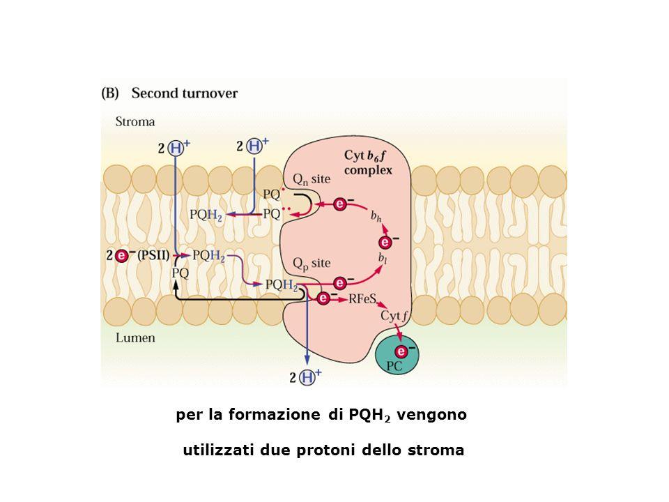 per la formazione di PQH 2 vengono utilizzati due protoni dello stroma