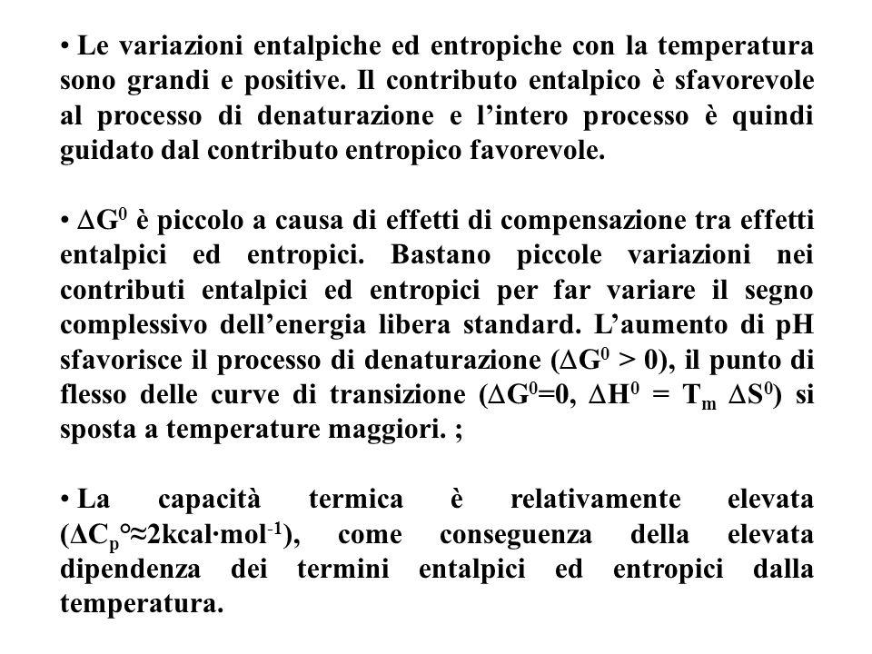 Le variazioni entalpiche ed entropiche con la temperatura sono grandi e positive. Il contributo entalpico è sfavorevole al processo di denaturazione e