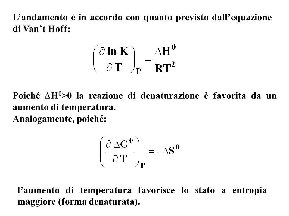 Landamento è in accordo con quanto previsto dallequazione di Vant Hoff: Poiché H 0 >0 la reazione di denaturazione è favorita da un aumento di tempera