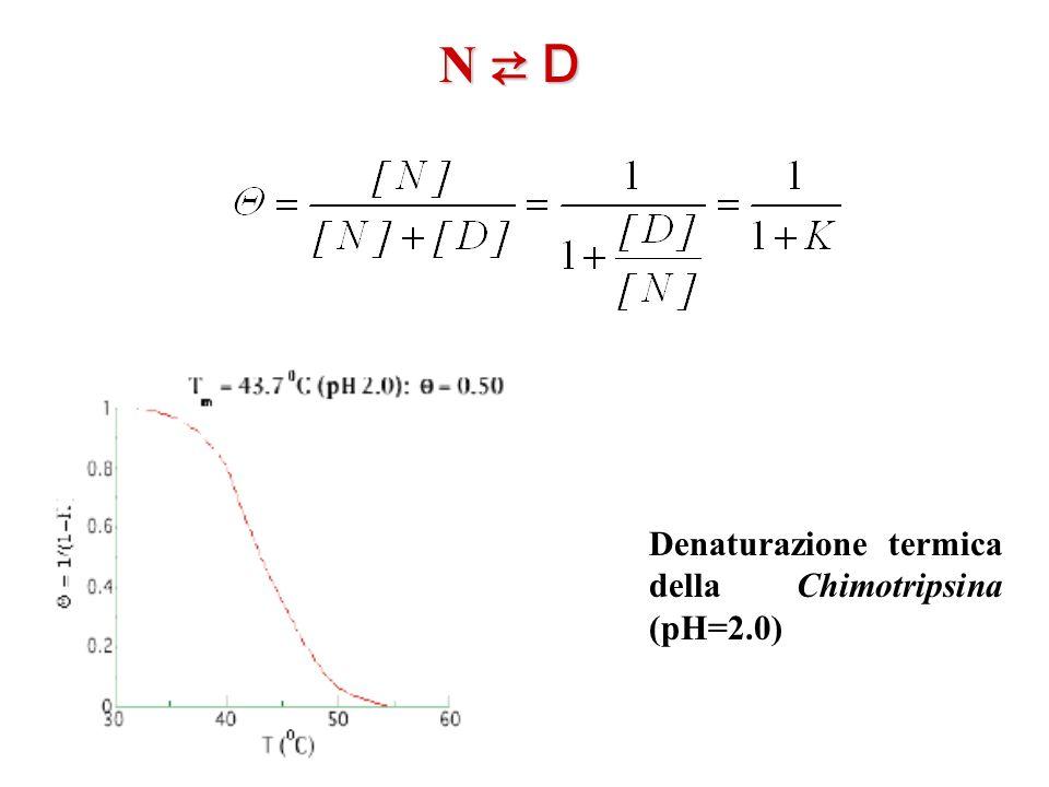 Denaturazione termica della Chimotripsina (pH=2.0) N D