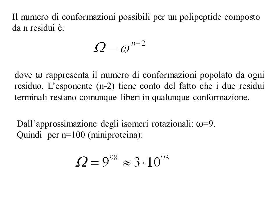 Il numero di conformazioni possibili per un polipeptide composto da n residui è: dove ω rappresenta il numero di conformazioni popolato da ogni residu