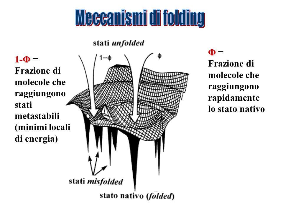 Φ Φ = Frazione di molecole che raggiungono rapidamente lo stato nativo 1-Φ 1-Φ = Frazione di molecole che raggiungono stati metastabili (minimi locali