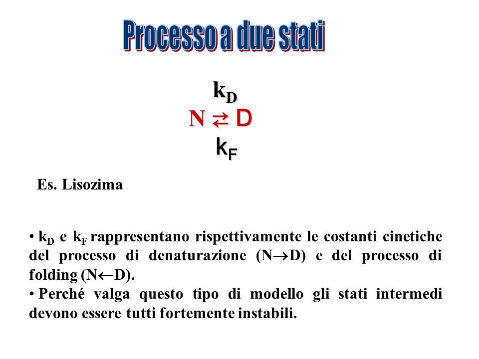 k D k D N D k F k F Es. Lisozima k D e k F rappresentano rispettivamente le costanti cinetiche del processo di denaturazione (N D) e del processo di f