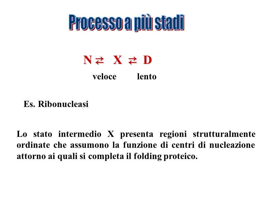 N X D Es. Ribonucleasi veloce lento Lo stato intermedio X presenta regioni strutturalmente ordinate che assumono la funzione di centri di nucleazione