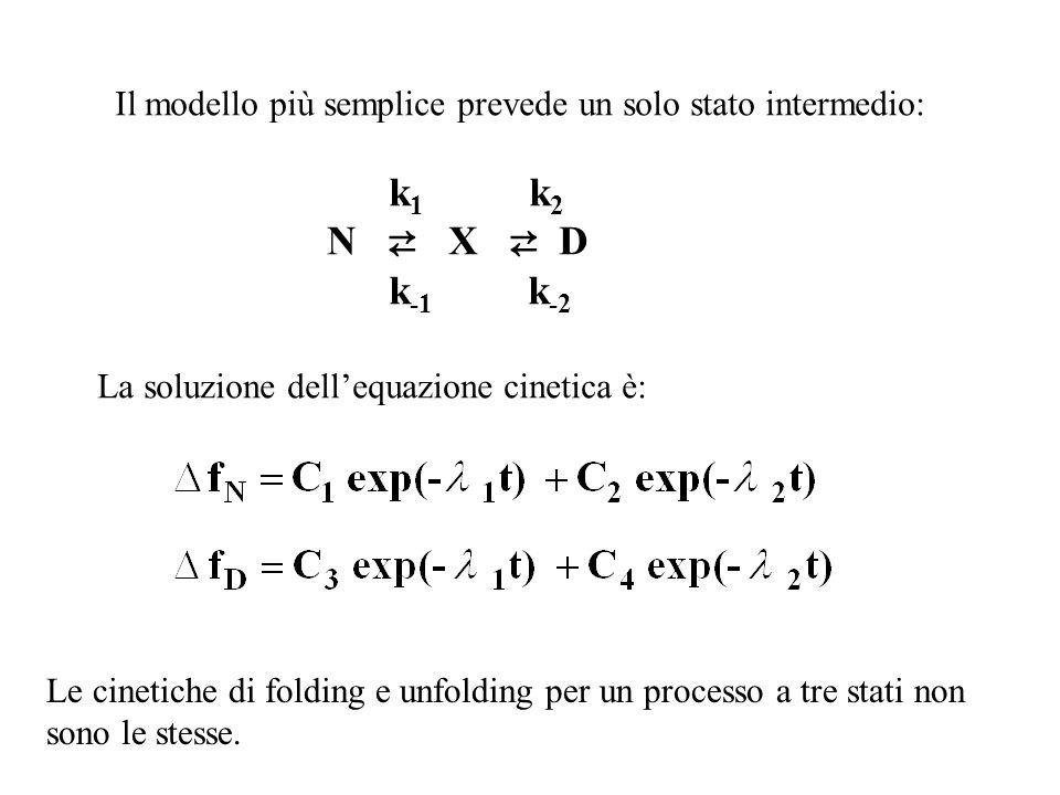 Il modello più semplice prevede un solo stato intermedio: k 1 k 2 N X D k -1 k -2 La soluzione dellequazione cinetica è: Le cinetiche di folding e unf