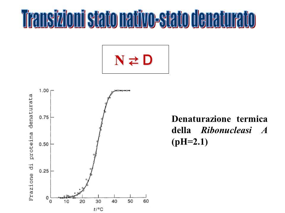 Denaturazione termica della Ribonucleasi A (pH=2.1)