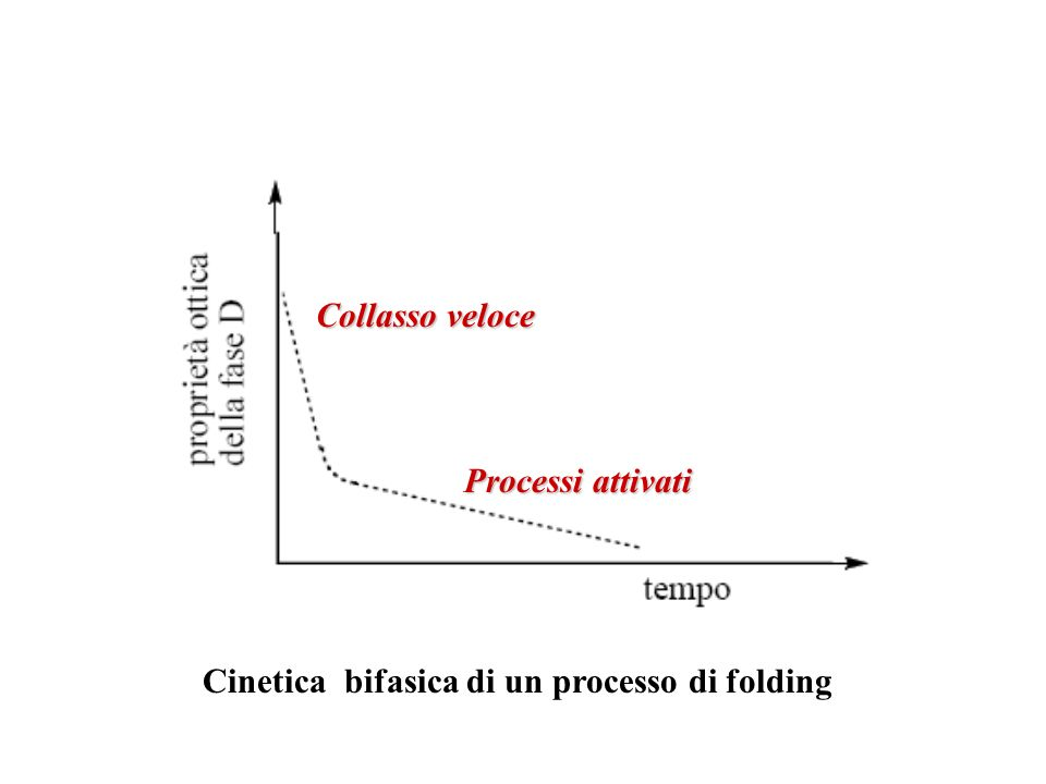 Cinetica bifasica di un processo di folding Collasso veloce Processi attivati