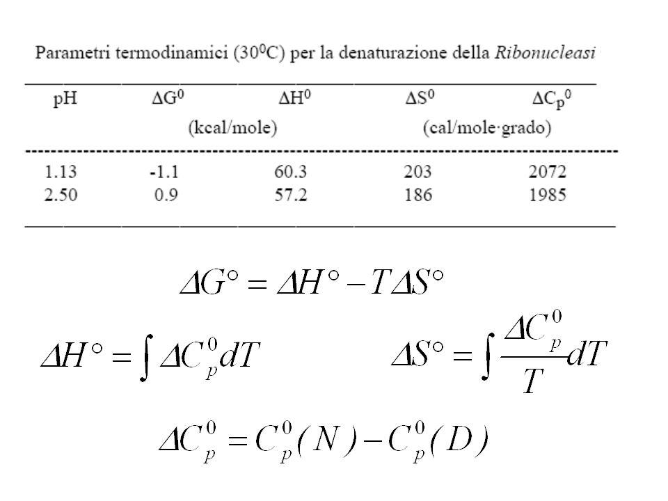 A pH=2.5, T=303K, p=1 atm: Predomina la forma nativa A pH=2.5, T=313K, p=1 atm: Predomina la forma denaturata