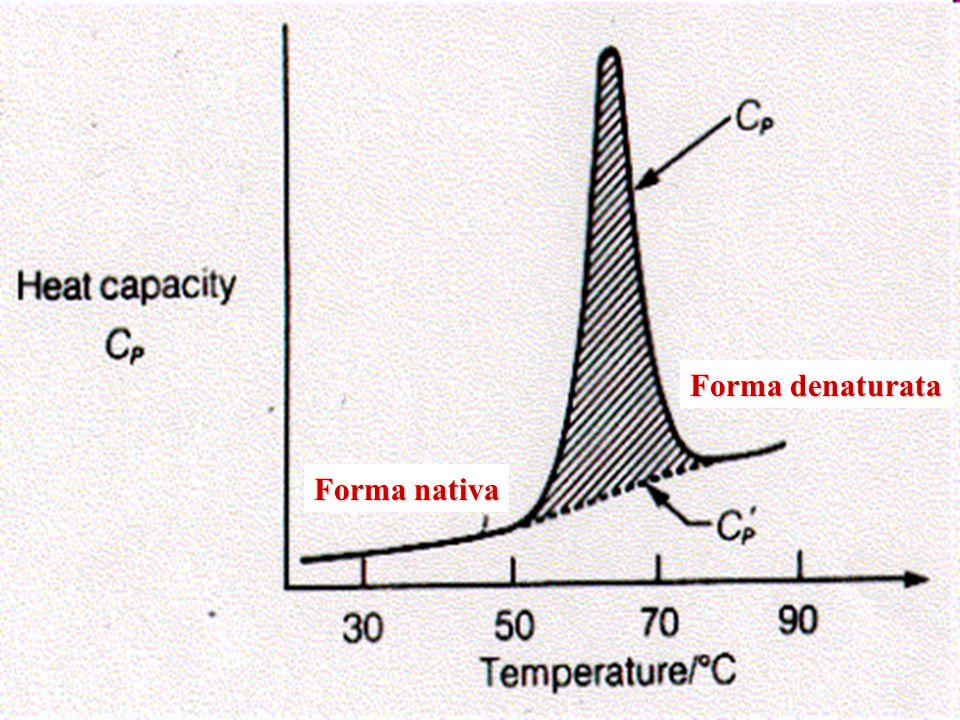 La variazione di capacità termica del processo di denaturazione è data dalla differenza tra le rette caratteristiche della forma nativa e denaturata: Dallintegrazione della curva sperimentale si ottengono la variazione entalpica ed entropica del processo: