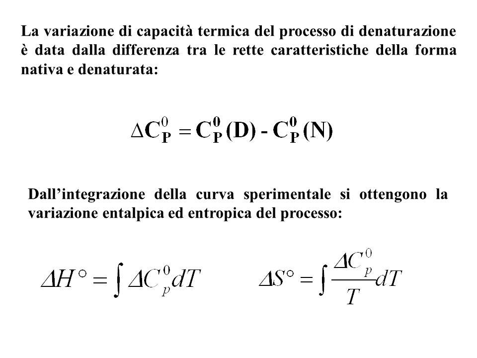 Le variazioni entalpiche ed entropiche con la temperatura sono grandi e positive.