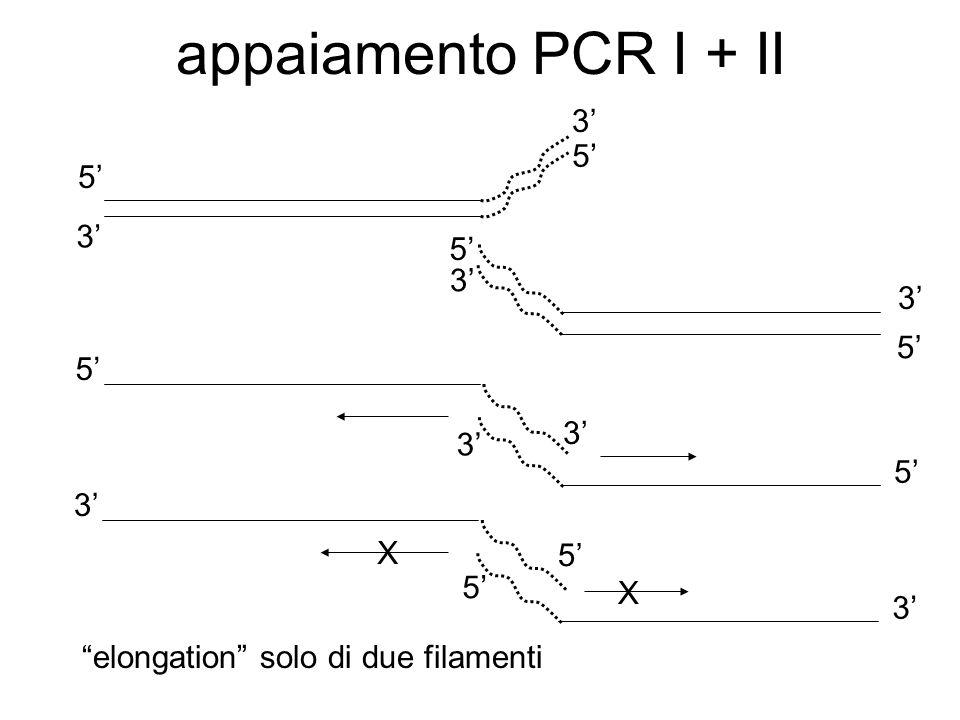 appaiamento PCR I + II 5 3 5 3 5 3 3 5 5 5 3 5 3 X X 3 3 5 elongation solo di due filamenti
