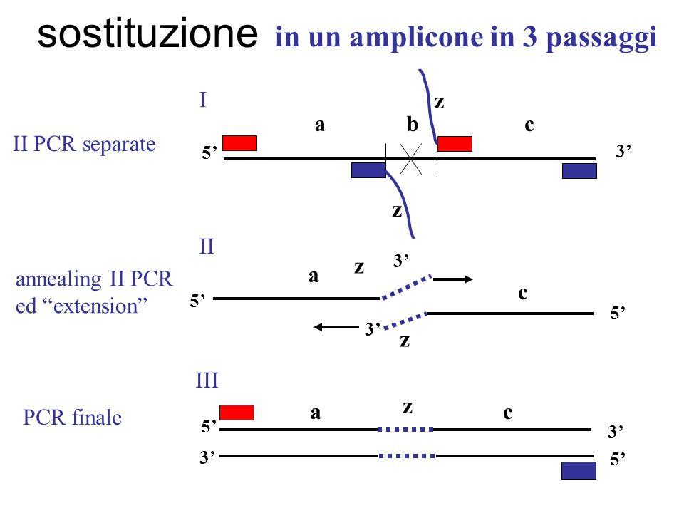in un amplicone in 3 passaggi z 3 acb z z 3 5 I II III annealing II PCR ed extension II PCR separate z a c 3 5 5 ac z 3 5 3 5 PCR finale sostituzione