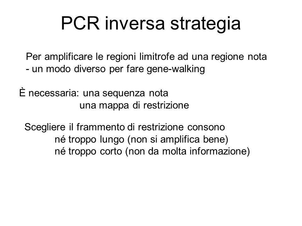 PCR inversa strategia Per amplificare le regioni limitrofe ad una regione nota - un modo diverso per fare gene-walking È necessaria: una sequenza nota