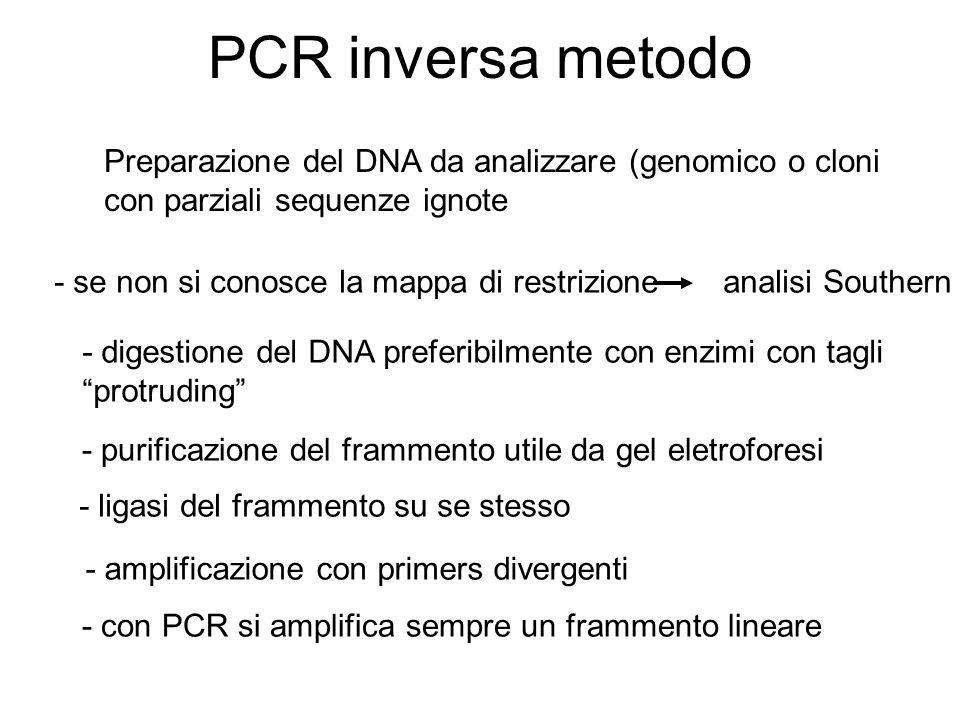 PCR inversa metodo Preparazione del DNA da analizzare (genomico o cloni con parziali sequenze ignote - se non si conosce la mappa di restrizione anali