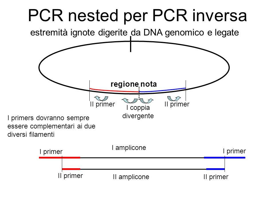 PCR nested per PCR inversa estremità ignote digerite da DNA genomico e legate regione nota I primers dovranno sempre essere complementari ai due diver