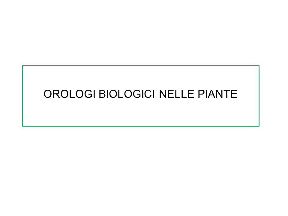 OROLOGI BIOLOGICI NELLE PIANTE