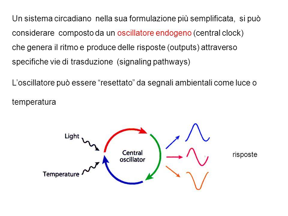 I ritmi endogeni sono molto diffusi in natura: perché? sono un meccanismo adattativo che consente agli organismi di rispondere al tempo opportuno al c