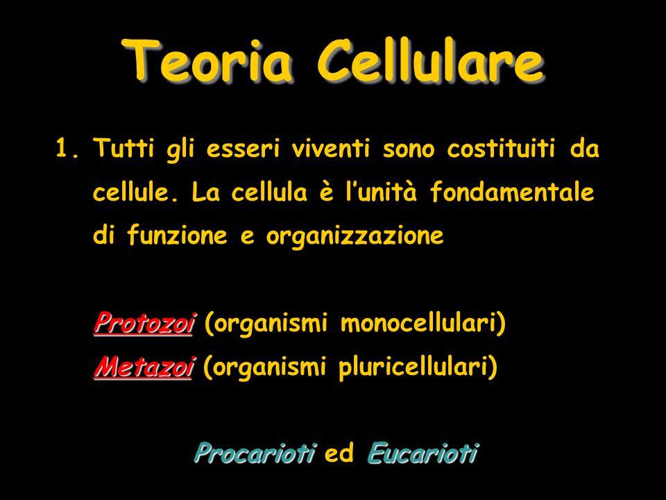 Teoria Cellulare 1.Tutti gli esseri viventi sono costituiti da cellule. La cellula è lunità fondamentale di funzione e organizzazione Protozoi Metazoi