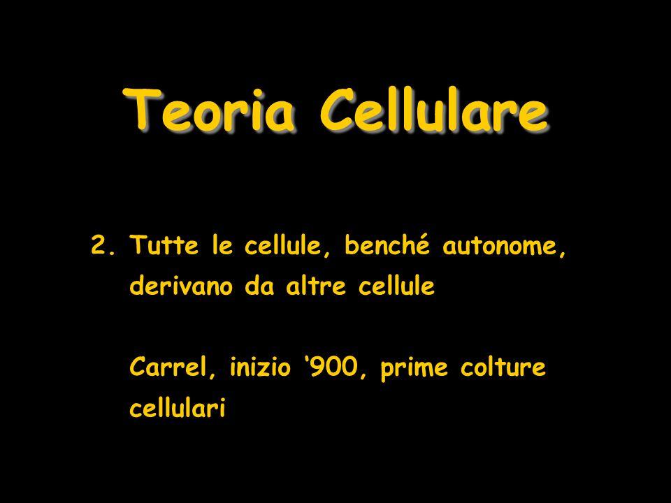 Teoria Cellulare 2.Tutte le cellule, benché autonome, derivano da altre cellule Carrel, inizio 900, prime colture cellulari