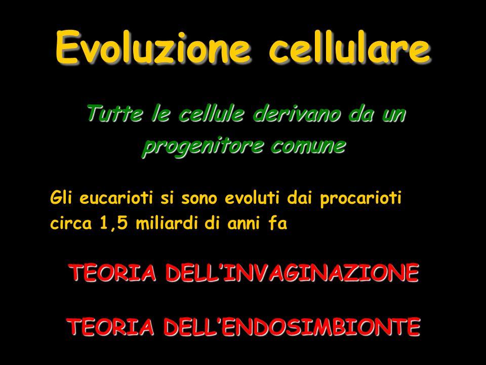 Evoluzione cellulare Tutte le cellule derivano da un progenitore comune Gli eucarioti si sono evoluti dai procarioti circa 1,5 miliardi di anni fa TEO